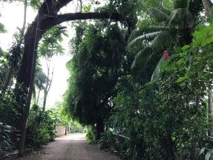 costa-rica-path