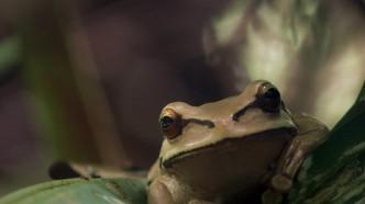 manp-frog
