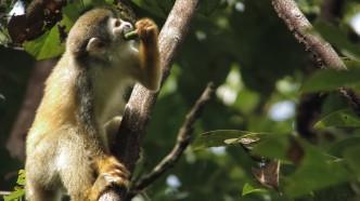 manp-monkey-2