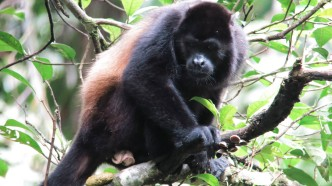 manp-monkey