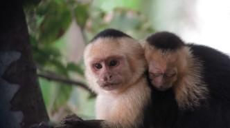 manp-monkeys