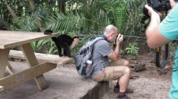 Is this monkey a thief or just curious???