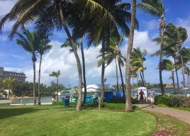 more of the beautiful Caribe Hilton property