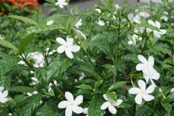 cr-flowers-2
