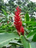 el-yunque-flowers-2