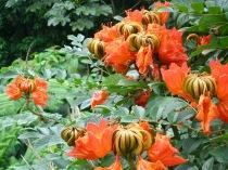 el-yunque-flowers
