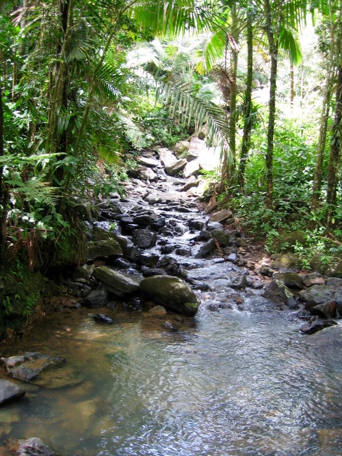 el-yunque-trail