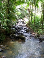 Day Trips from San Juan: El Yunque Rainforest