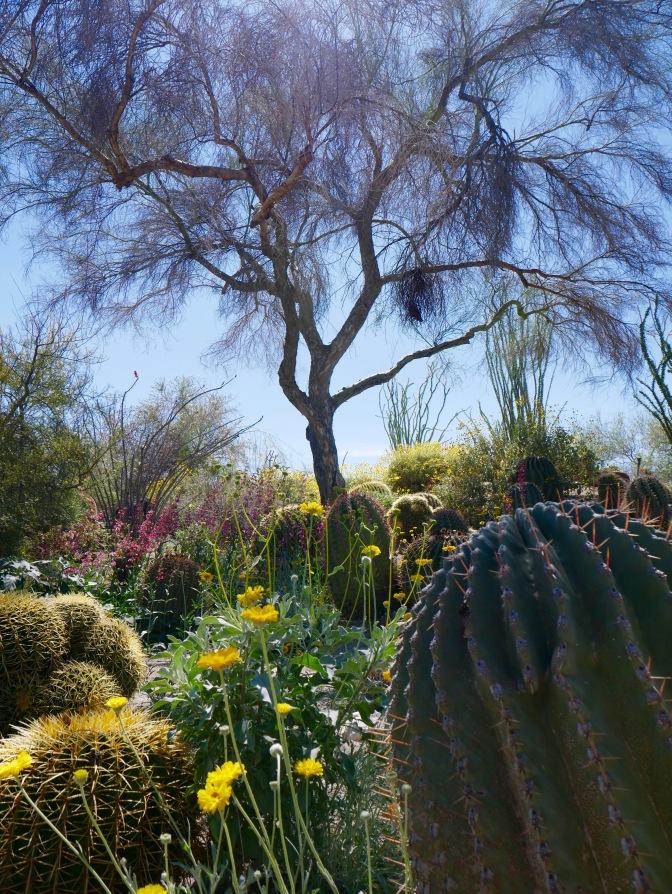 living desert cactus travelnerdplans