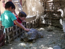 living desert tortoise travelnerdplans
