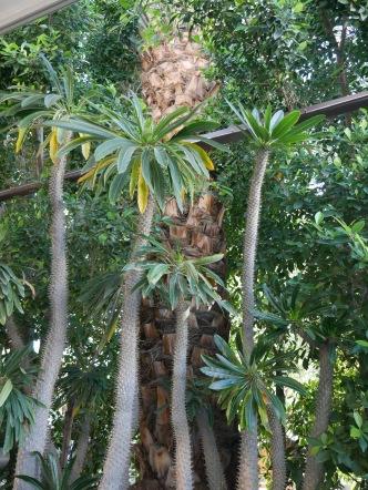 palm springs odd palms travelnerdplans
