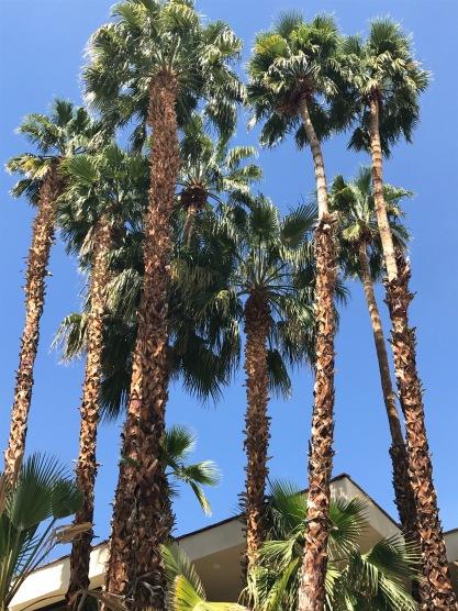 palm springs palms travelnerdplans