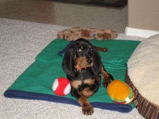 jackson puppy travelnerdplans