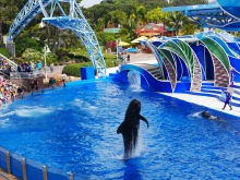 seaworld pilot whale 1 travelnerdplans