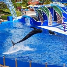 seaworld pilot whale 2 travelnerdplans