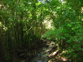 st kitts rainforest travelnerdplans