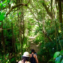 st kitts wingfield estate walk into rainforest travelnerdplans