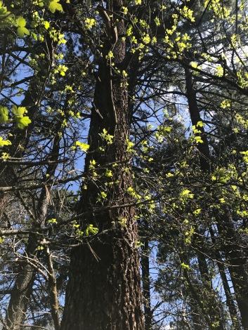 oak glen 4