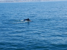 whale watching dolphin