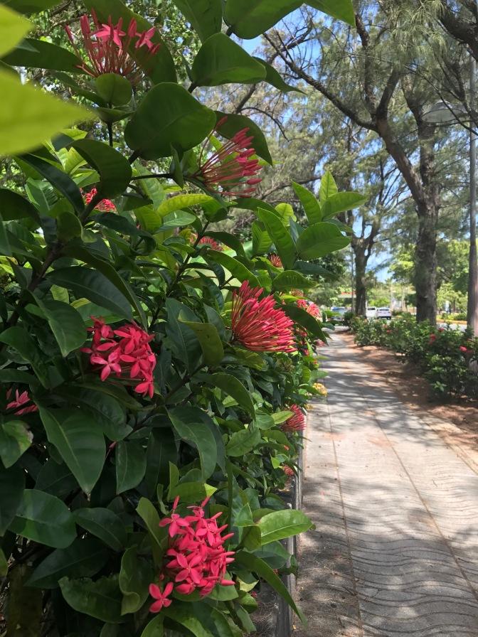 lovely stroll to old san juan
