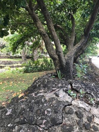 park near caribe 2