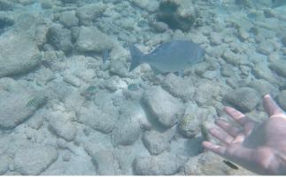 fish swimming alongside Mr. Travel Nerd