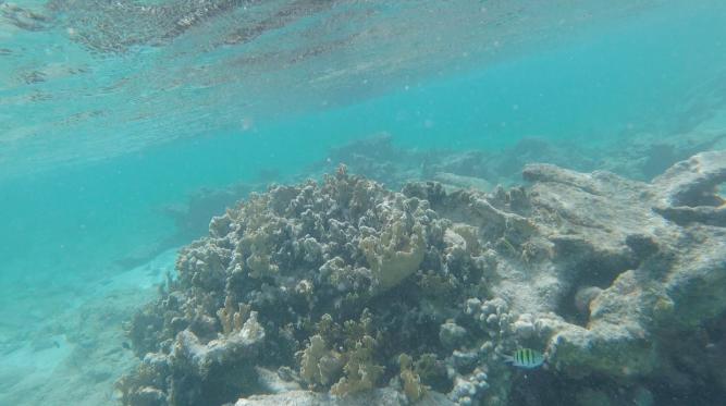 little striped fish enjoying their habitat