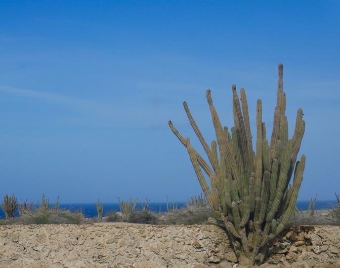 aruba cactus and ocean