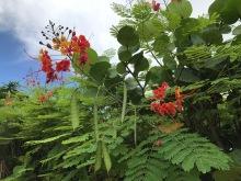 gorgeous plants