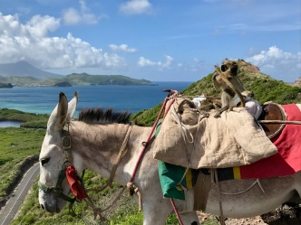 st kitts timothy hill and a donkey