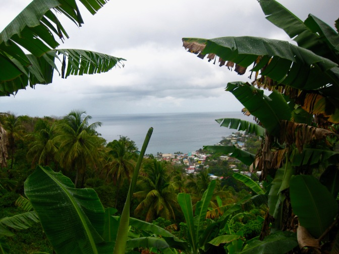 st lucia peeking through the leaves
